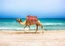 8 denní dovolená - Tunisko - ostrov Djerba s odletem z Prahy již od 12 790 Kč All Inclusive