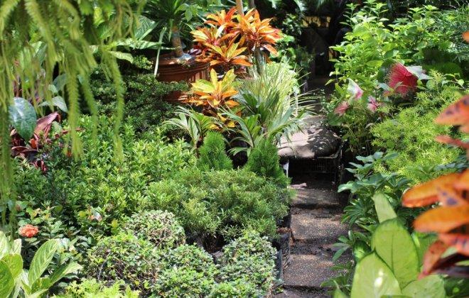 philippine-garden.jpg