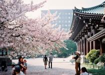 Japonsko: levné letenky - Fukuoka s odletem z Norimberku již od 10 590 Kč vč. Vánoc
