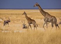 Jižní Afrika: levné letenky - Johannesburg s odletem z Budapešti od 11 594 Kč