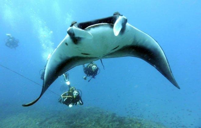 cape verde diving.jpg