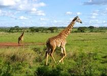 Keňa: levné letenky - Nairobi již od 5 990 Kč s odletem z Ženevy