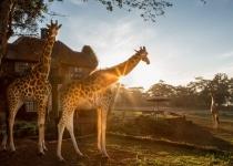 Keňa: levné letenky - Nairobi s odletem z Ženevy již od 6 390 Kč