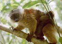 Madagaskar: levné letenky - ostrov Nossi Be s odletem z Vídně již od 16 190 Kč