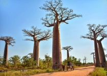 Madagaskar: levné letenky - Tananarive (Antananarivo) s odletem z Milána již od 11 755 Kč