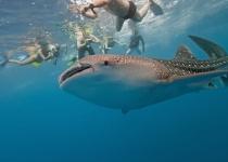 Mexiko: levné letenky - Cancún s odletem z Vídně již od 11 853 Kč Vánoce