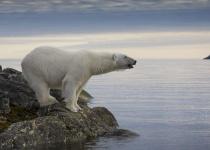 Špicberky: levné letenky Longyearbyen s odletem z Berlína již od 6 157 Kč v době letních prázdnin