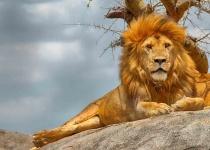 Tanzánie: levné letenky - Dar Es Salaam s odletem z Vídně již od 11 955 Kč