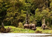 Národní park Kerinci Seblat na Sumatře