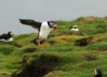 Jižní Hebridy – divoké skotské ostrovy