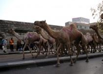 Dovolená v Káhiře