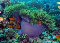 Potápění v Národním parku Ras Mohamed na Sinajském poloostrově