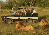 Jak si užít divoké safari