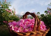 Festival růží v Maroku