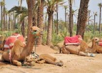 Marrákéš v Maroku