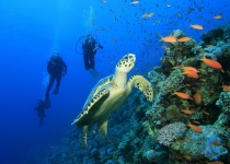 Potápění na Zanzibaru