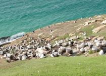 Vandr na Falklandy