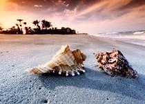 Karibské a pacifické pláže Mexika