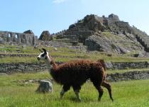 Vydejte se do Peru do království lam