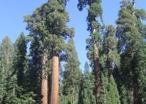 Park NP Sequoia, domov nejmohutnějších stromů planety
