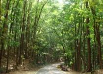 Mangrovy a mahagonový les na ostrově Bohol, Filipíny