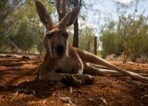 Jak si naplánovat svou cestu do Austrálie