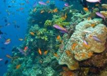 Velká korálová bariéra v Austrálii