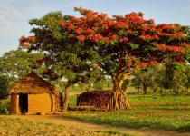 Vúdú kněží, králové a duchové v Beninu