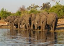 Nezapomenutelné safari