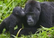 Rwanda – nejkrásnější safari světa