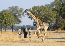 Jak podniknout soukromé safari v Zambii