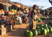 Zambie – základní informace