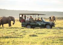 Africké safari destinace pro začátečníky