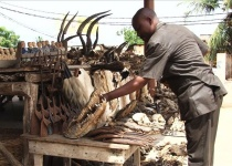 Akodessewa – největší vúdú tržiště světa
