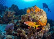 Karibský ostrov Svatý Eustach