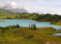 Pozorování divokých zvířat v Anchorage