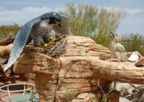 Springs Preserve - poznejte život v nevadské poušti