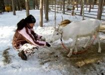 Dovolená v Laponsku