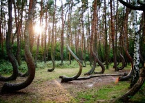 Strašidlený les Hoia-Baciu v Rumunsku