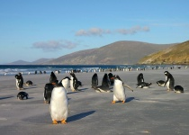 Falklandy – základní informace