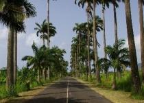 Dovolená na Guadeloupe