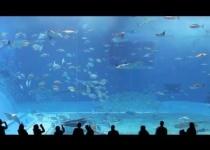 Okinawa - druhé největší akvárium
