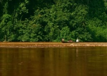 Nejstarší prales světa Taman Negara