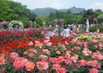 Festivaly růží ve světě