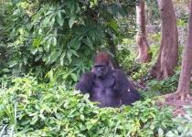 Opičí turistika