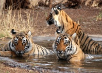 Sundarbans - plánování tropického dobrodružství