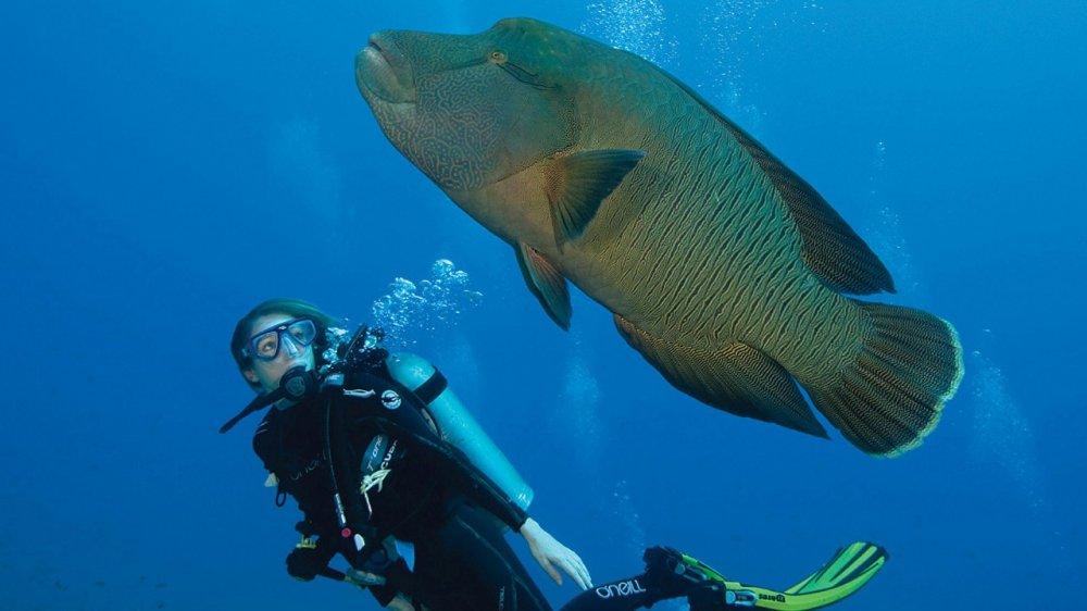 Tropické destinace, kde se můžete naučit potápět 10