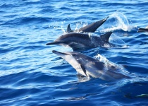 Pozorování velryb a delfínů na ostrově Bohol - Filipíny