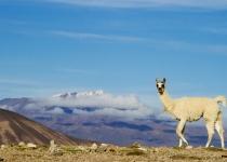 Základní a praktické informace Bolívie